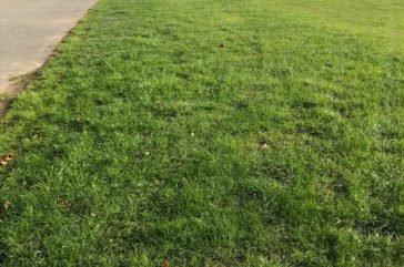 Grassmesh overflow car park